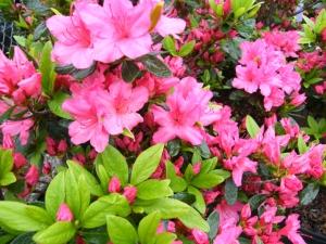 flowershrub