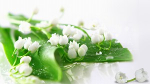 lily-of-the-valley-73191